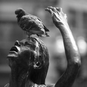 pigeon shit