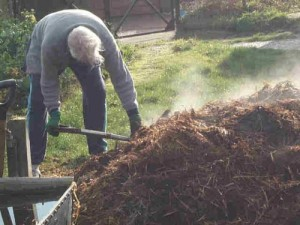 hot_steamin_manure-500x375